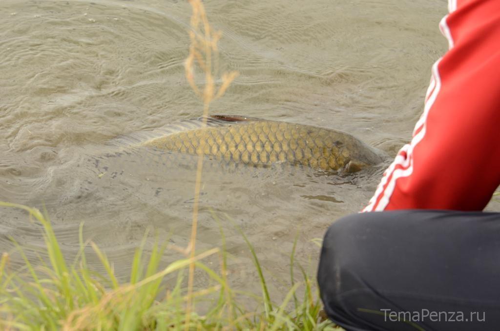калининский пруд рыбалка