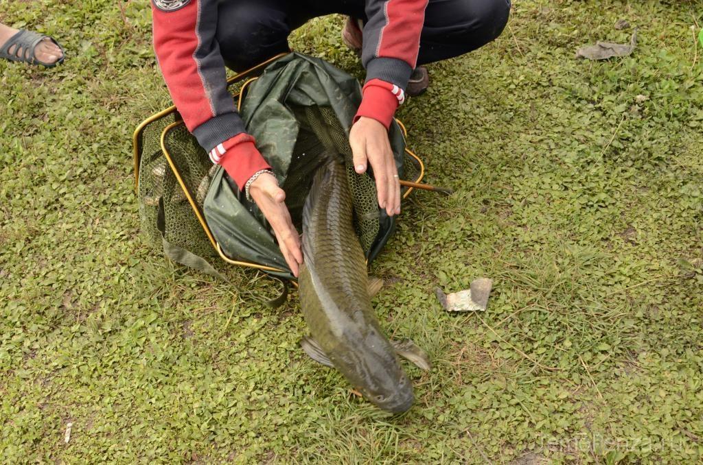 все о рыбалка в пензенской области в сентябре